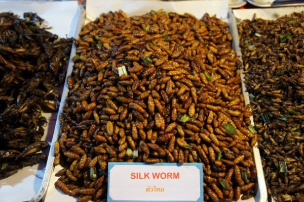 Fried silkworm at a food market in Chiang Mai