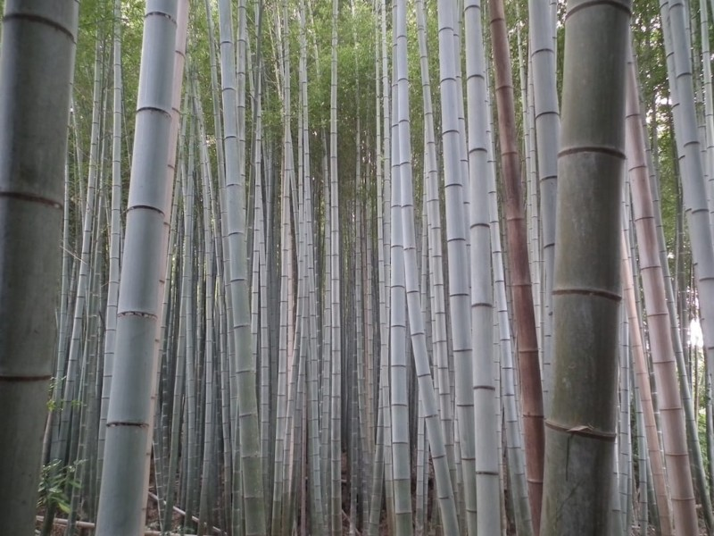 What to do in Kyoto Arashiyama Sagano bamboo forest