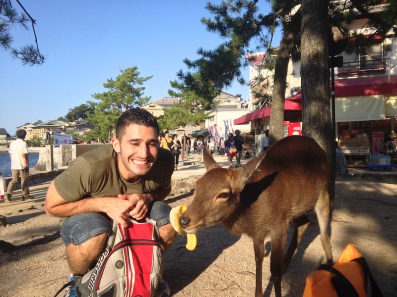 Japan 10 days itinerary Miyajima deer Stefan