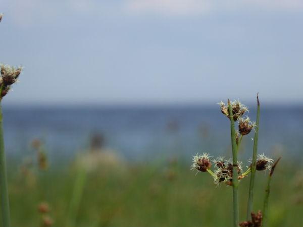 Photo prise depuis les jardins du palais donnant sur le golfe de Finlande