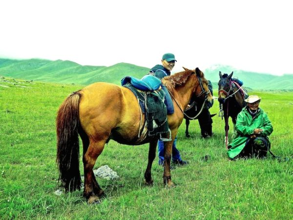 The Mongolian horses we rode at Orkhon valley