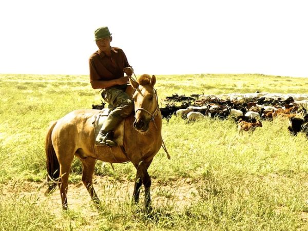 Nomadic goat herder on his horse