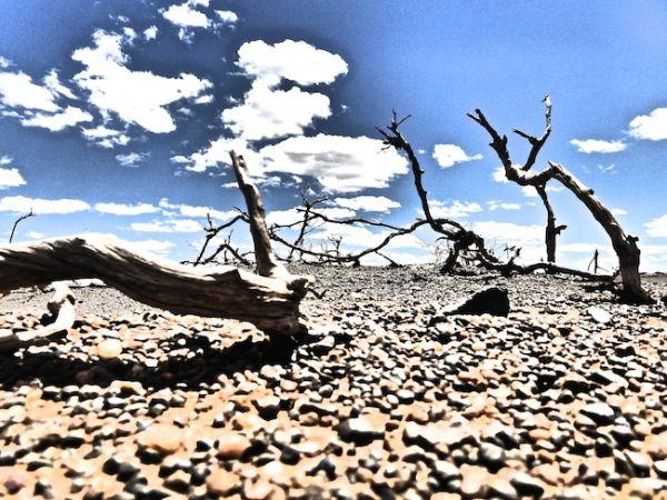 Le sol aride du désert de Gobi