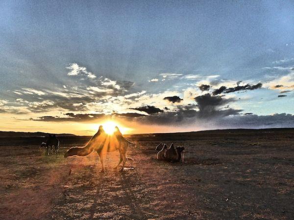 Coucher de soleil à Khongoryn Els dans le désert de Gobi