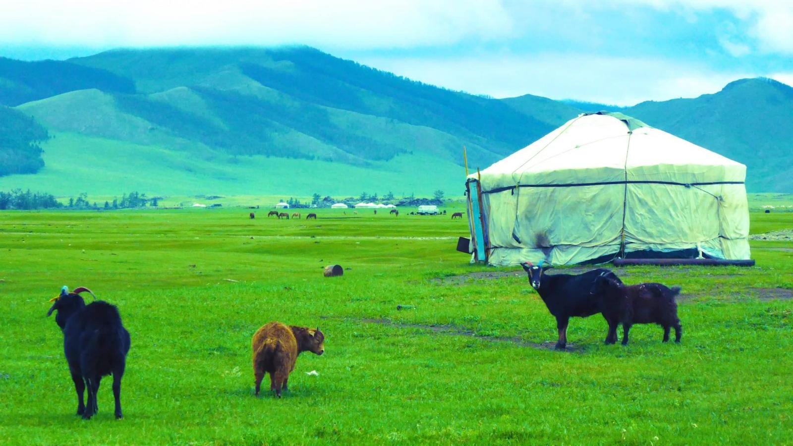Mongolian nomadic family ger