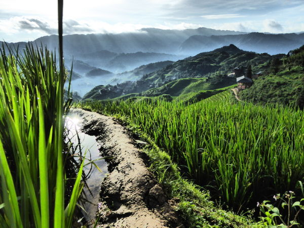 The Longsheng Dragon's Backbone Rice Terraces