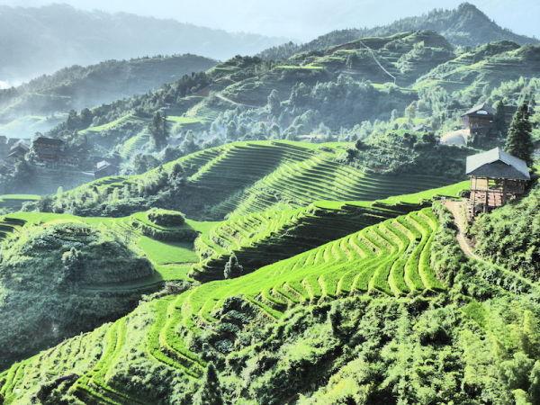 Vue de Tiantouzhai sur les rizières en terrasses de Longji