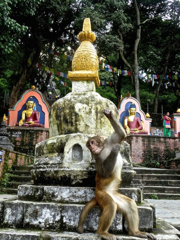 Le temple aux singes de katmandou Swayambhunath