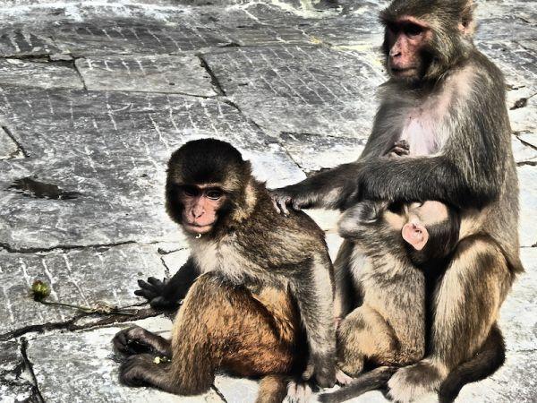 Cute photogenic monkeys at the Monkey Temple