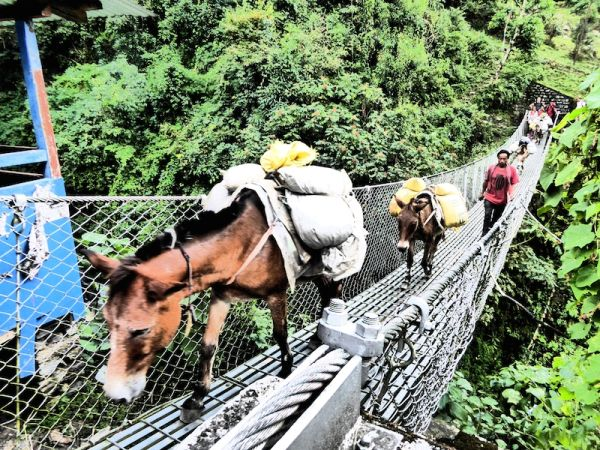 This man with his donkeys crossing the bridge near Tikethunga village