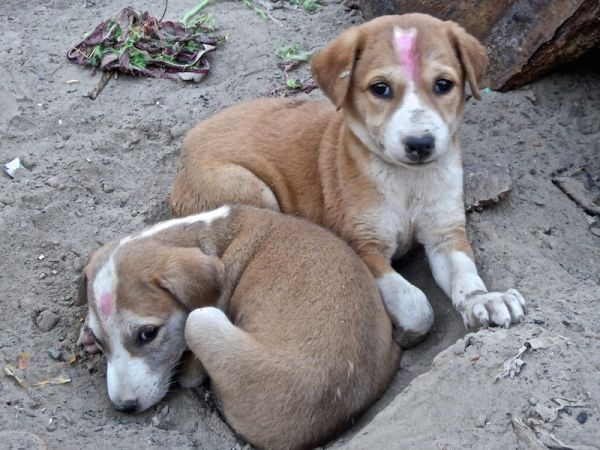 Gay India young puppy love