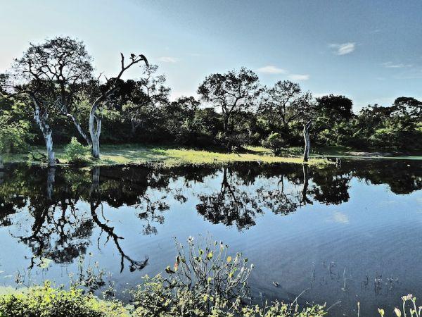 Yala or Udawalawe for your Safari in Sri Lanka?