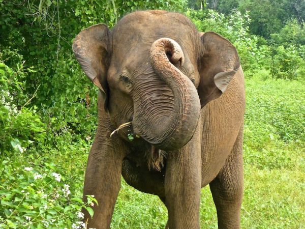 The photogenic elephants of Udawalawe