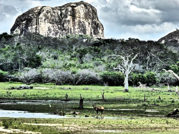 Elephant Rock at Yala National Park