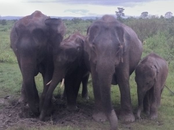 Family of elephants close up at Udawalawe