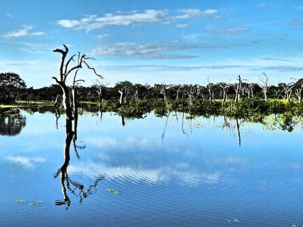 Beautiful pond at Yala National Park