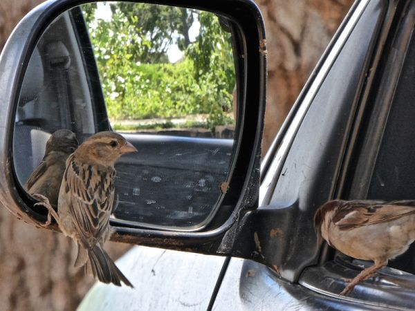 Two cute birds by our car window at Yala