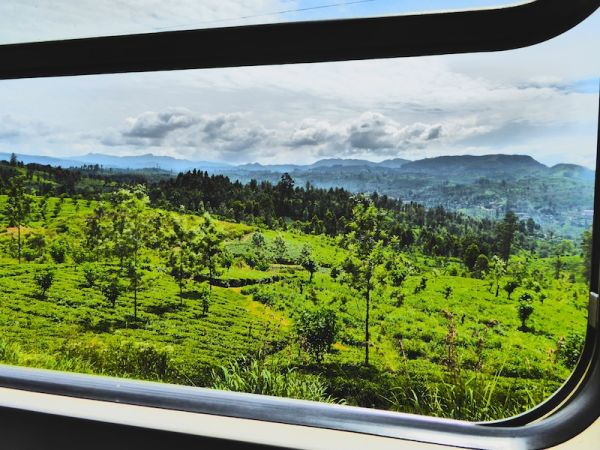 The view of the tea plantations near Kandy
