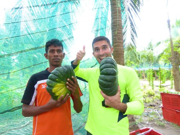 Stefan and Nassir with pumpkins on Thoddoo island
