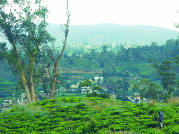 Train ride from Kandy to Nuwara Eliya, stunning scenery of Sri Lanka