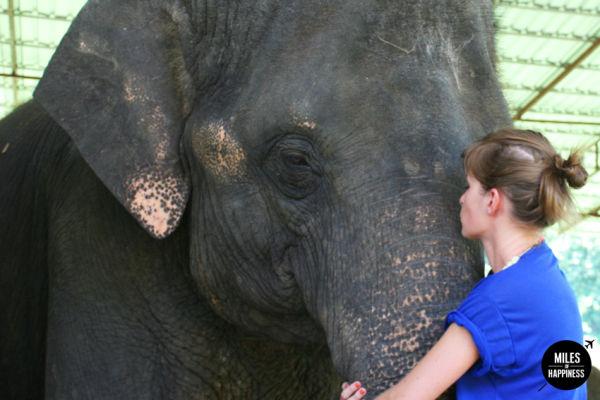 Kiss an elephant