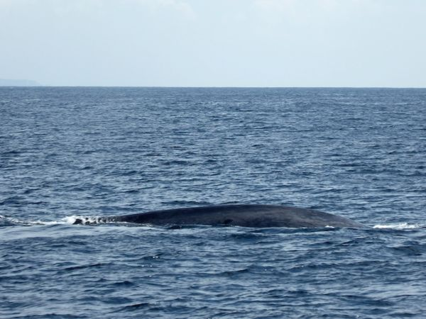 Whale on the water surface