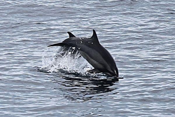 Bottlenose and spinner dolphins