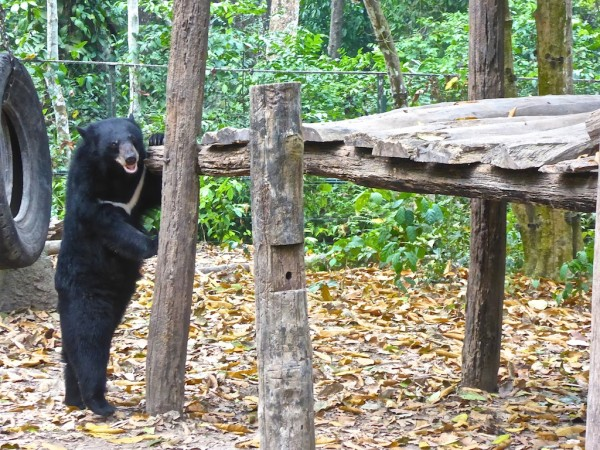 A bear standing in the park near the Kuang Si Falls