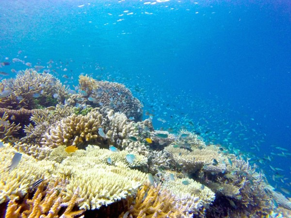 The stunning coral reef at Flower Island