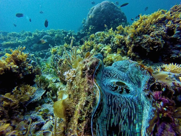 The giant clams near the main beach