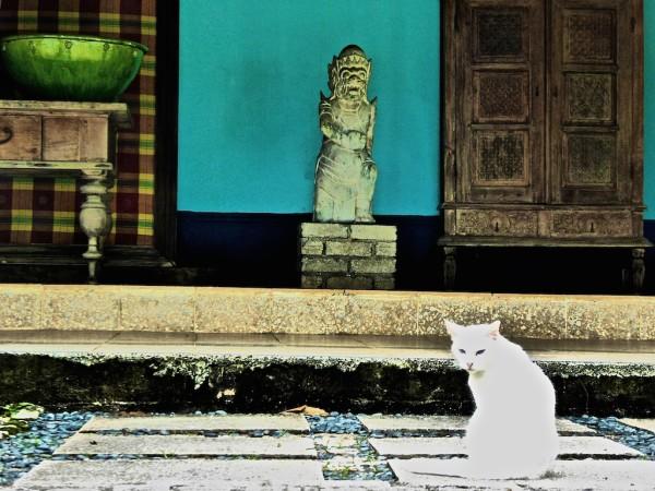 Photogenic cat at Bon Ton