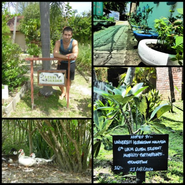 Plants growing in toilet bowls, herbs garden, happy ducks and plant adoption program at The Frangipani