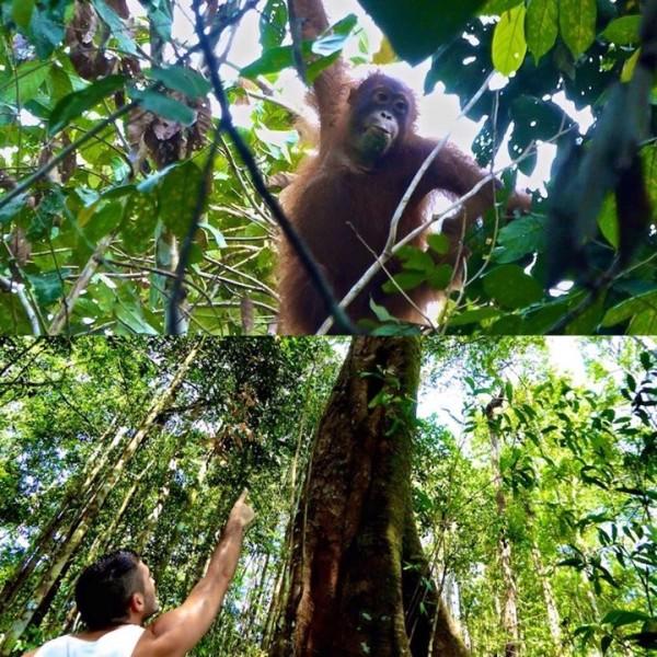 Stefan spotting Olivia the Orang-Utan at Kinabatangan