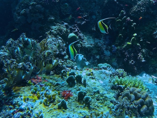 Tropical heaven at the Cauldron Reef in Komodo National Park