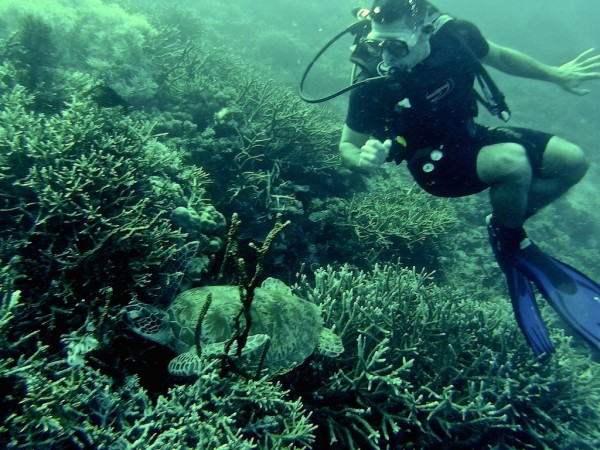 Stefan and turtle diving in the Komodo National Park