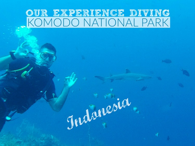 Our experience diving in the Komodo National Park, Indonesia