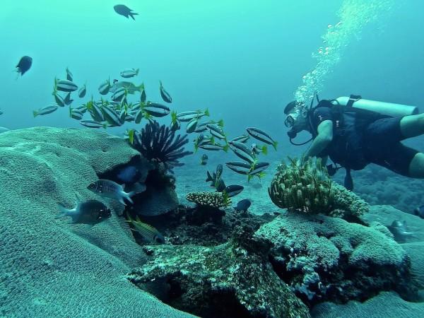 Stefan diving Gili Memo reef