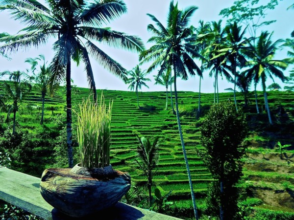 Beautiful lush green countryside Ubud in Bali, Indonesia