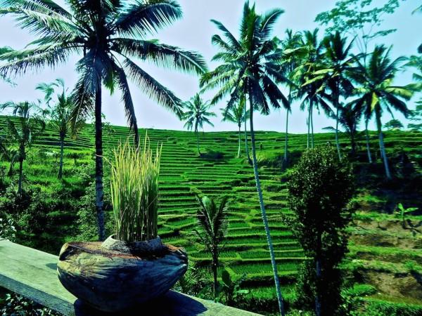 Beautiful lush green countryside Ubud in Bali, Indonesia