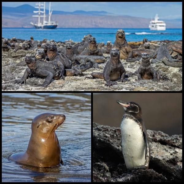 gay cruise to the galapagos wildlife