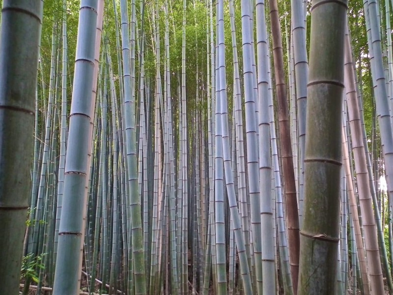 Planning a trip to Japan Kyoto Arashiyama place to visit