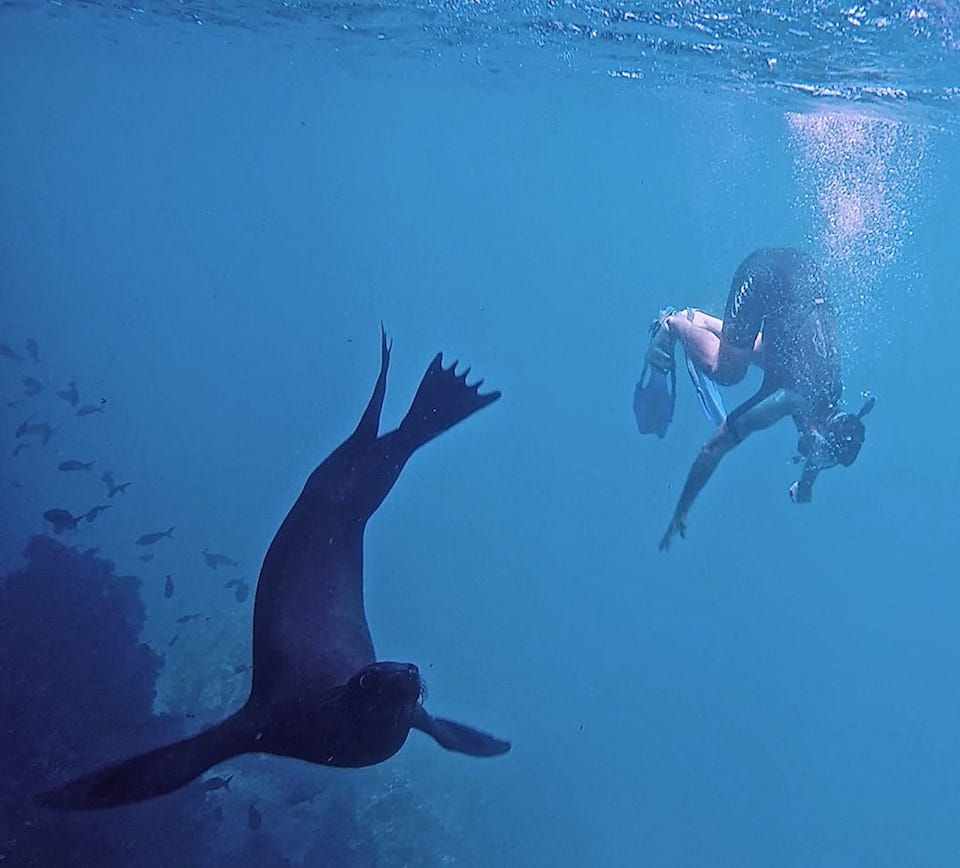 sea lion snorkelling on gay cruise to the galapagos