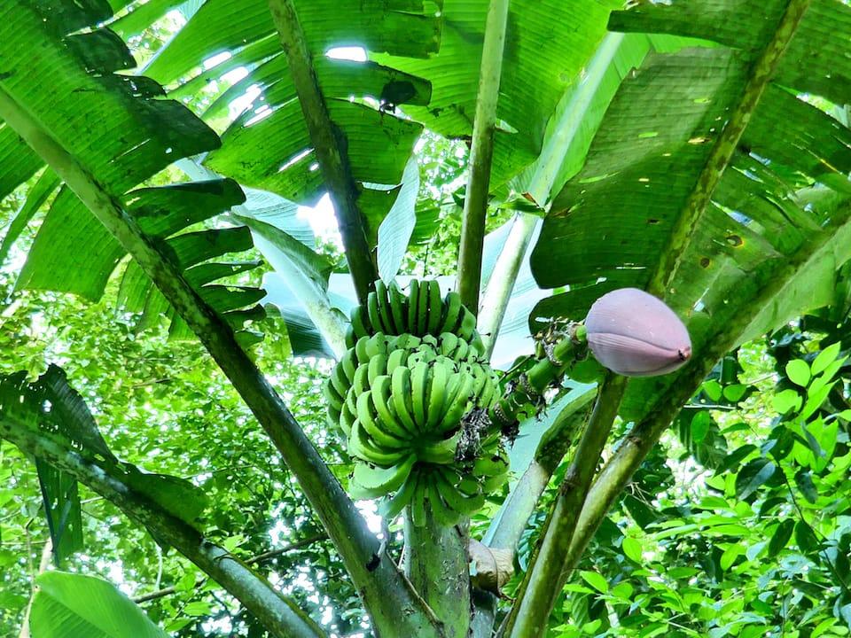 banana exporters interesting facts ecuador