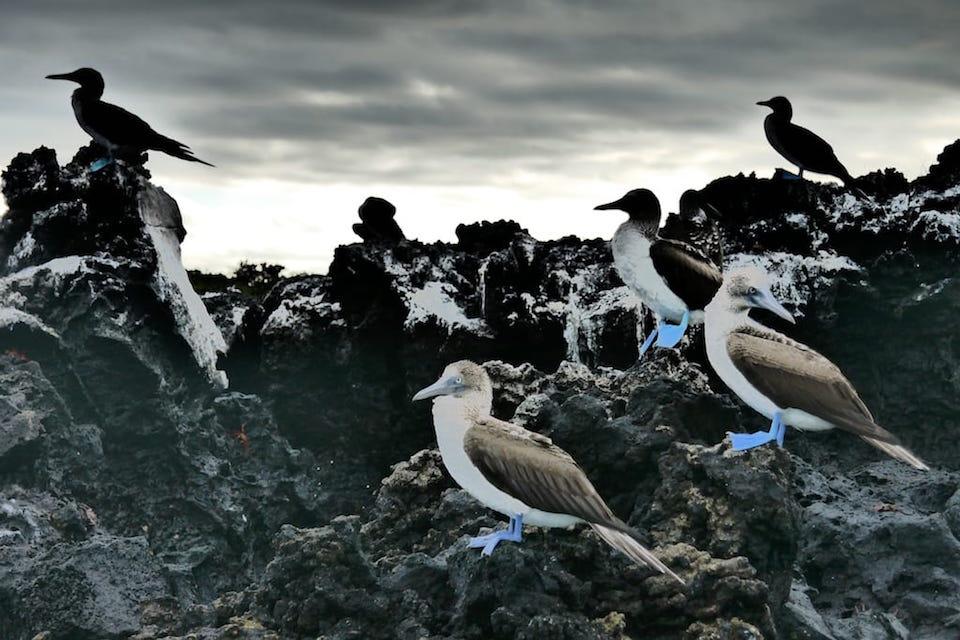Blue Footed Boobies Santa Cruz East Islands Galapagos itinerary