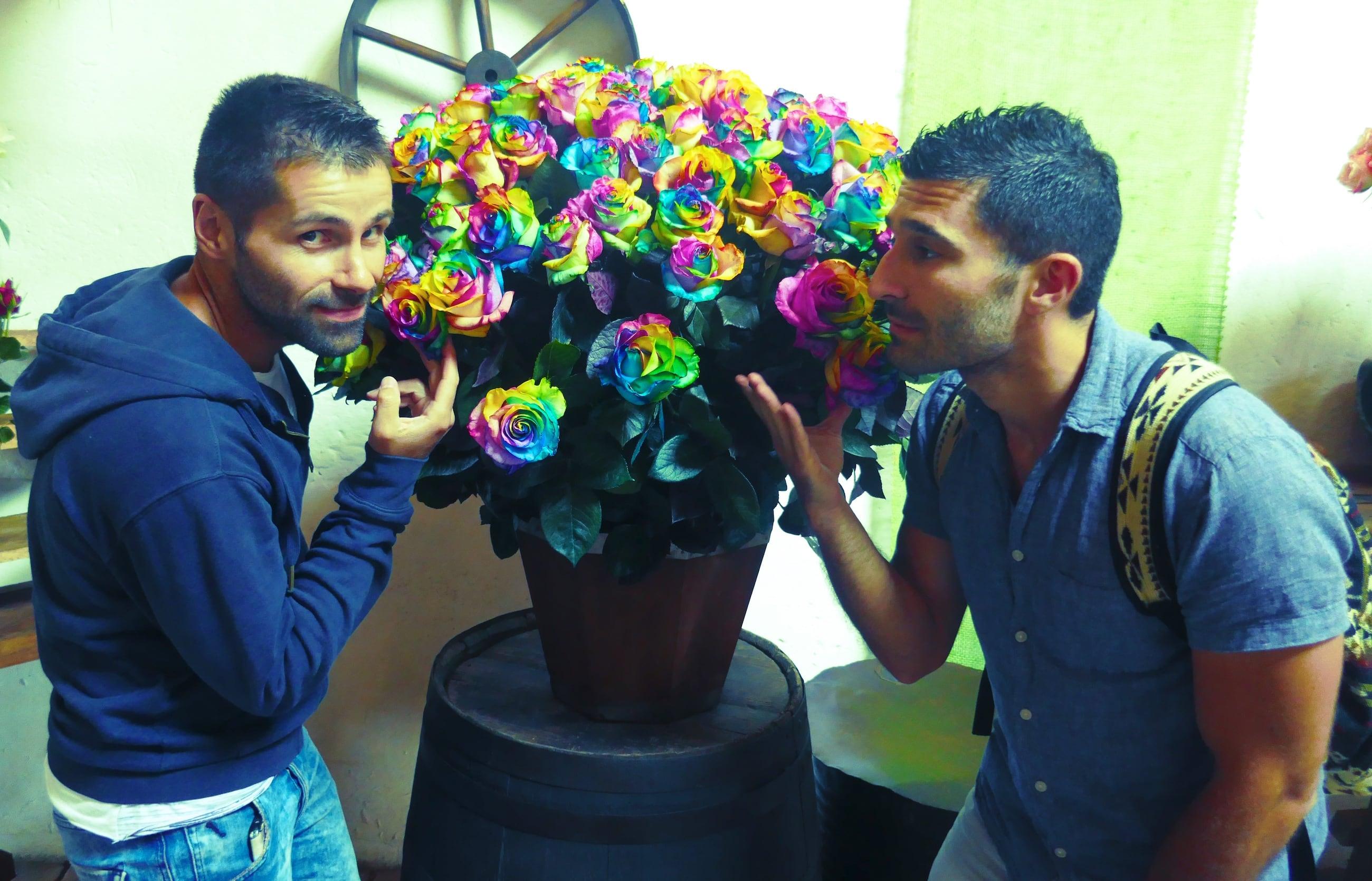Smelling rainbow roses in Ecuador