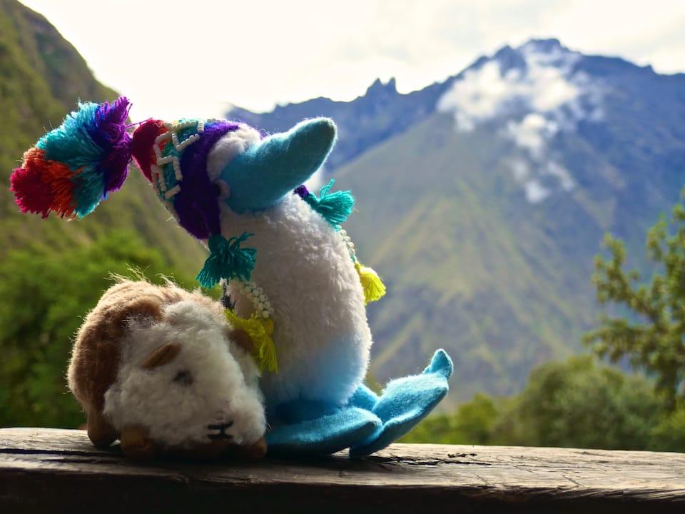 Conchita the cuy interesting facts about Peru