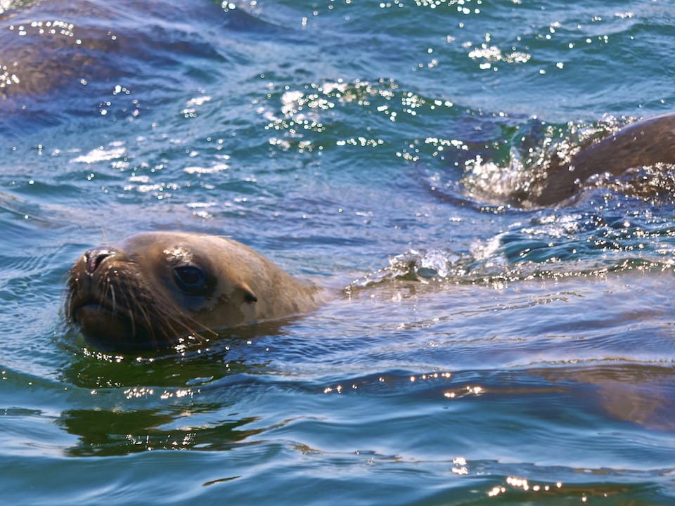 swimming with sea lions tour in Lima