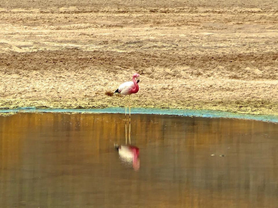 Flamingo excursion with Alto Atacama gay hotel San Pedro