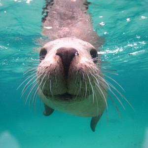 Peninsula Valdes offers diving and snorkelling with sea lions.