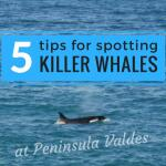 5 tips for spotting killer whales at Peninsula Valdes in Patagonia